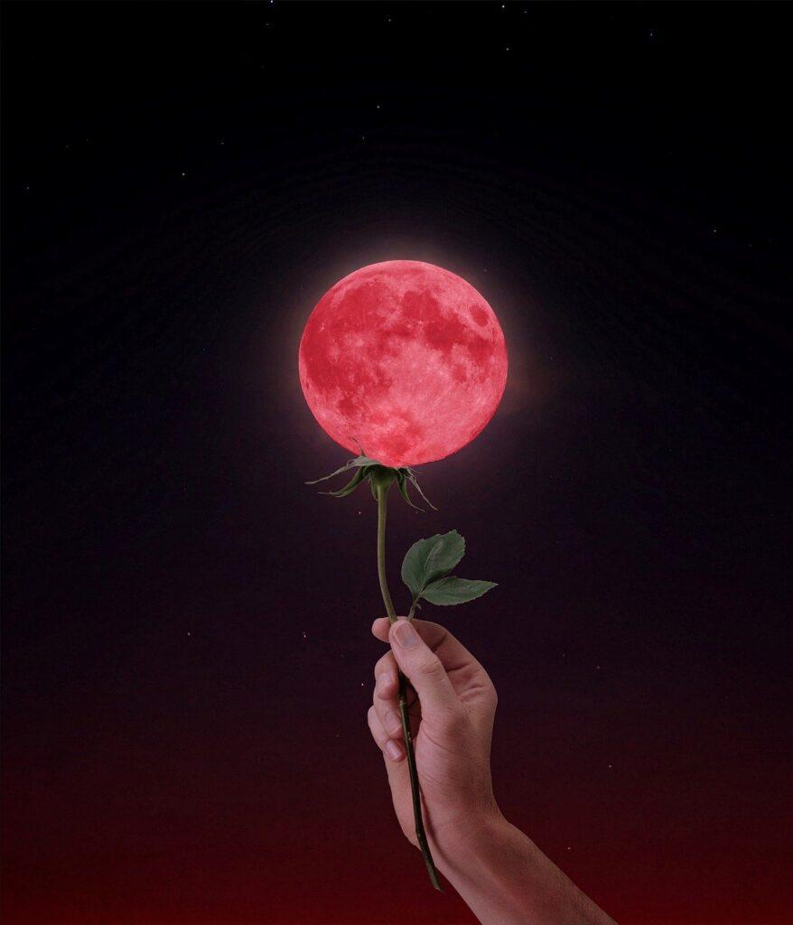 moon, flower, hand